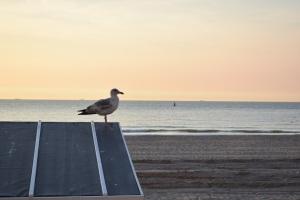 Oostende, zee, kust