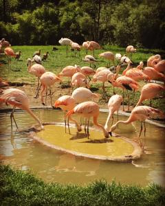 papegaai, planckendaal, zoo, mechelen